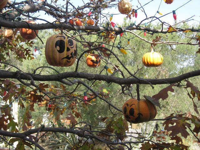 Halloween Tree in Frontierland